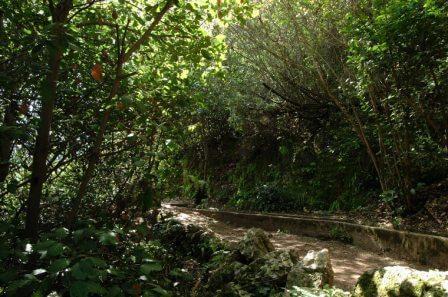 גן עדן של הטבע - נחל עמוד