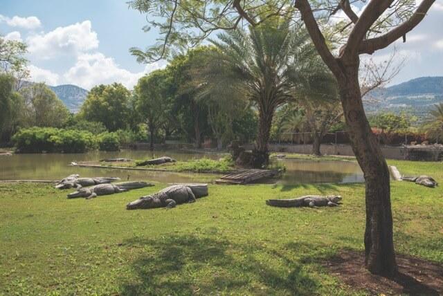חוות התנינים - חמת גדר
