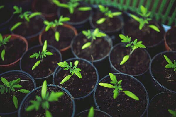 מגדלים ירקות עם הילדים