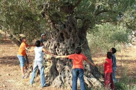 ימי המסיק: פסטיבל ימי ענף הזית
