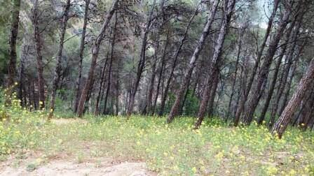 אביבי משהו: 3 מסלולי טיול שווים