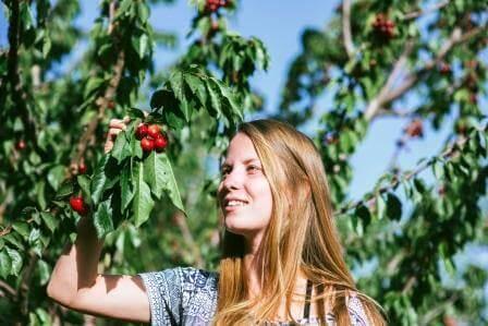 עונת הדובדבנים - ההמלצות הכי שוות