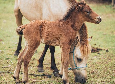 אמץ לך חבר, או סוס