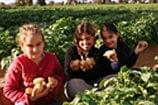 חבל הבשור: הפנינג חקלאי בפסח