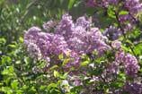 טרום אביב: הפריחה שאחרי החורף