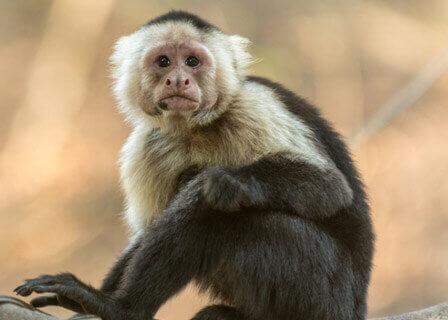 בקצב אפריקאי: חגיגות פסח בפארק הקופים