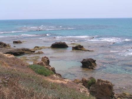 חוף כשר: לא רק בפסח