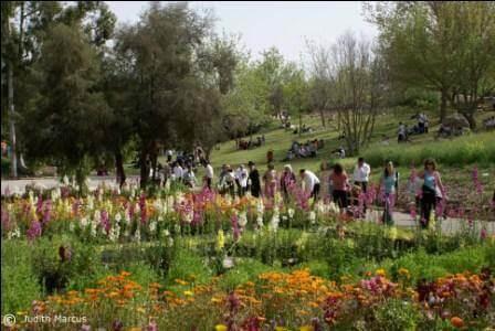 הגן הבוטני: פריחה בסגנון יפני