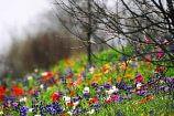 טיולים פסח 2014: טיולים בעקבות הפריחה