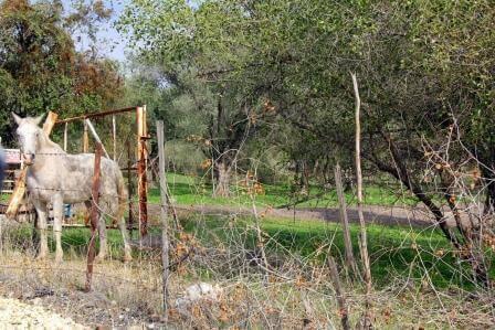 פינות חמד וסוסים מכל עבר