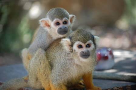 פארק הקופים (צילום מתן פליזר)