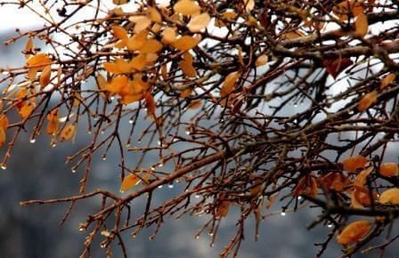 צבעים של תל אביב החורפית (צילום אורן גבאי גולן)