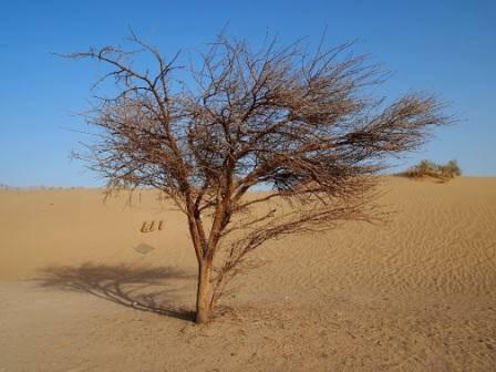במקומות שאין שטפונות, יבש גם בחורף (צילום אורן גבאי גולן)