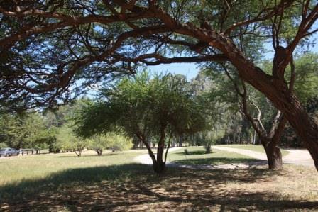 """יער האילנות (התמונה באדיבות קק""""ל)"""