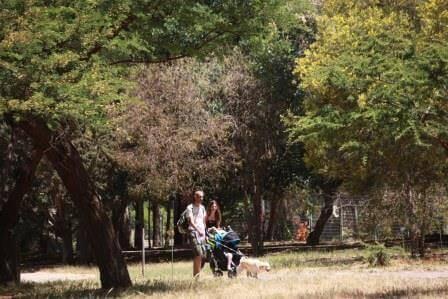 """מטיילים ביער האילנות (התמונה באדישות קק""""ל)"""