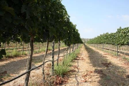 איזור מטה יהודה שופע טבע, צילום: חני בן יהודה