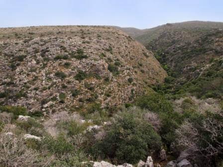 הטבע במלוא הדרו (צילום אורן גבאי גולן)