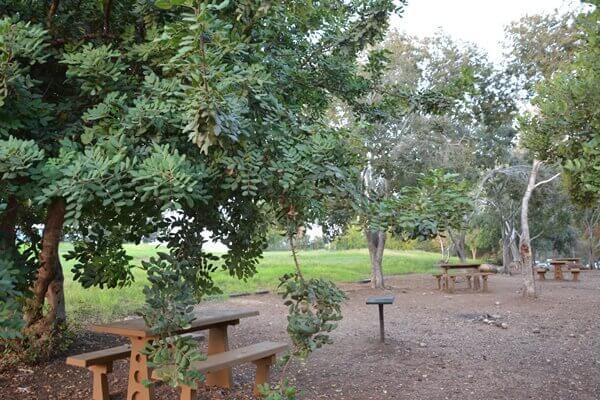 """החביב על הממנגלים ועל אנשים הפיקניק: יער בן שמן. צילום: מלכה ברקאי לקק""""ל"""
