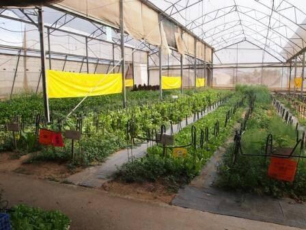 חוות ירקות השקד