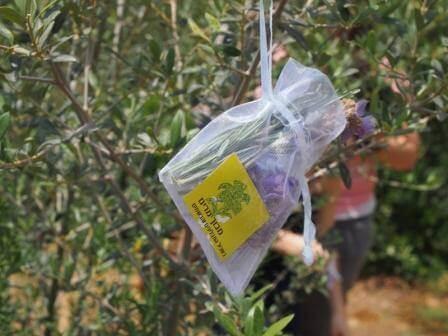 מבוך של תבלינים ועצי פרי