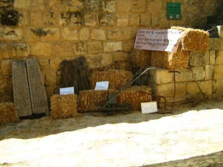 מהחיטה אל הלחם (צילום יואב גרינברג)
