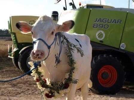 מי הכי יפה?  צילום צור חקלאות