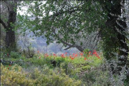 יער נווה צוף (צילום שחר כהן)