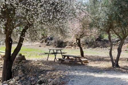 עכשיו עונת הפריחה (צילום  שחר כהן)