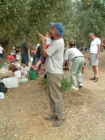 התמונה באדיבות ענף הזית הישראלי