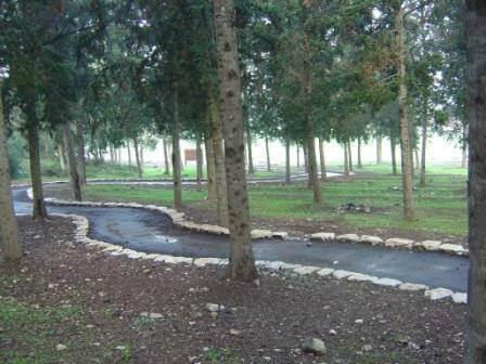 """יער ציפורי, התמונה באדיבות קק""""ל"""