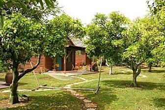 אשכולית בקתות עץ בפרדס