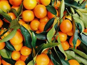 שביל התפוזים