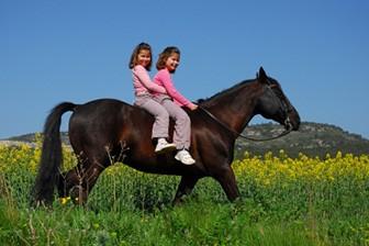 אביגדור - רכיבת סוסים