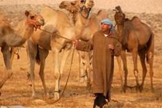 טיולי גמלים בחאן בארותיים