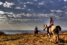 ורד הגליל- חוות סוסים
