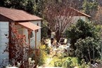 בית קטן בבוסתן - צוק תמר