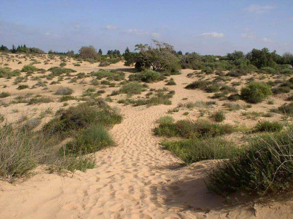 פארק חולות ניצנים (צלם:איל שפירא)